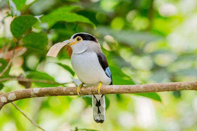 bird voice