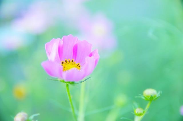 a single flower